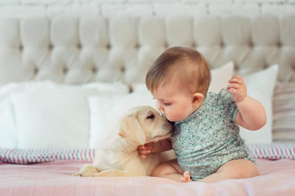 beneficios de tener una mascota para mi bebe