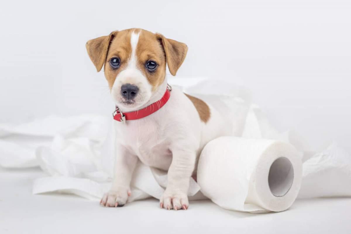 consejos-para-ensenarle-a-tu-perro-a-ir-al-bano-1