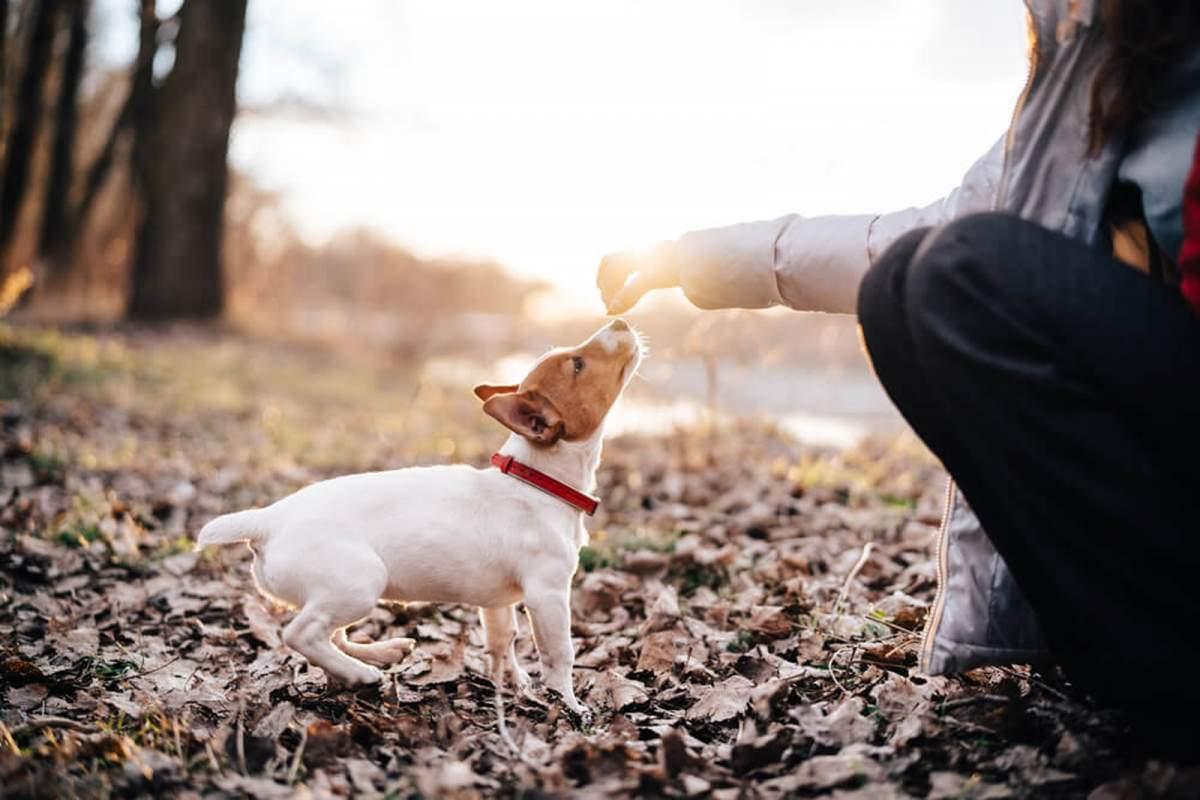 consejos-para-recibir-a-tu-mascota-1
