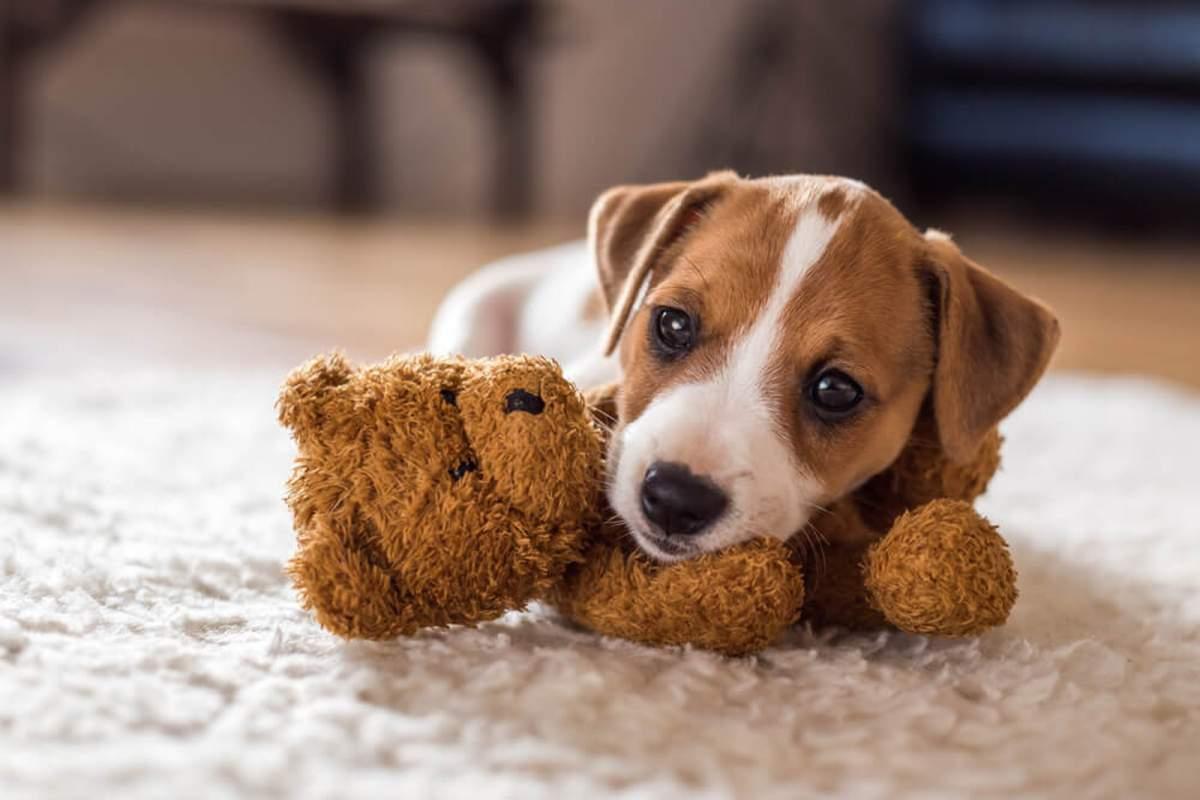 los-juguetes-ideales-para-el-desarrollo-de-tu-cachorro-1