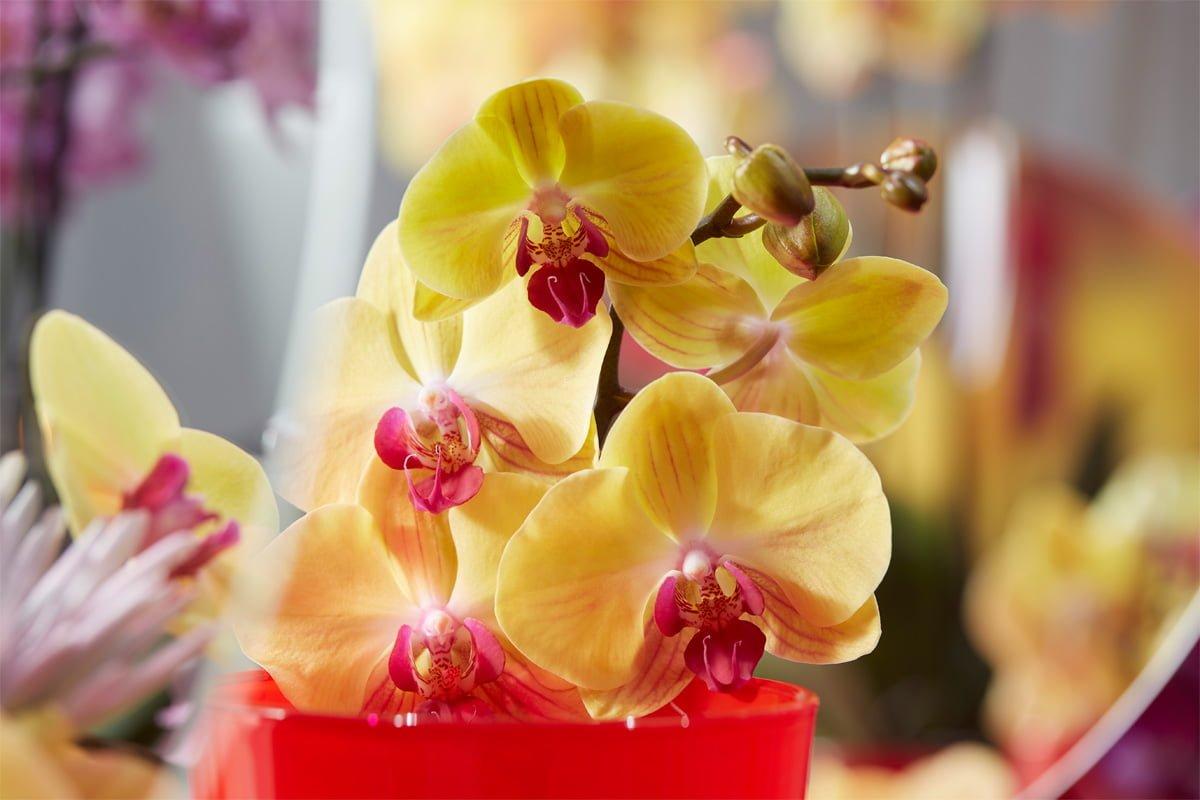 beneficios de las flores en casa