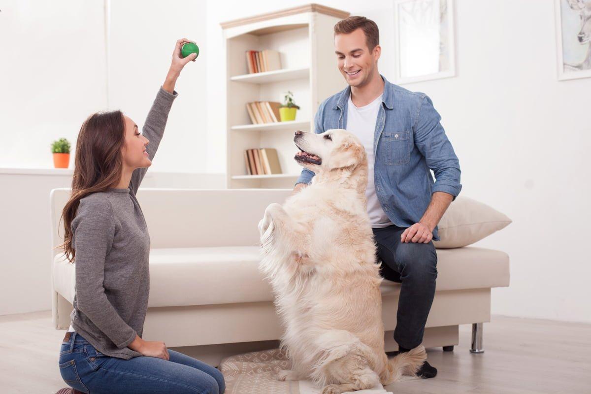 Tener un perro en casa