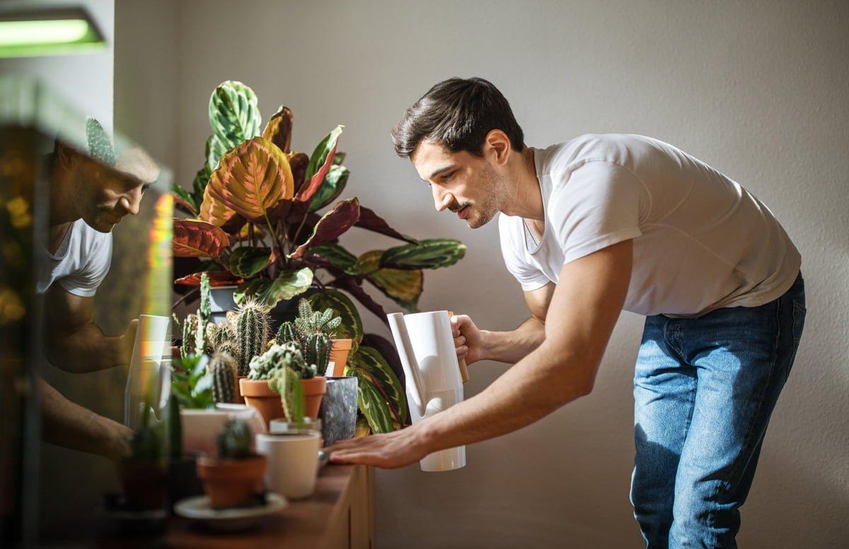 Cuidados para tus plantas de interiores