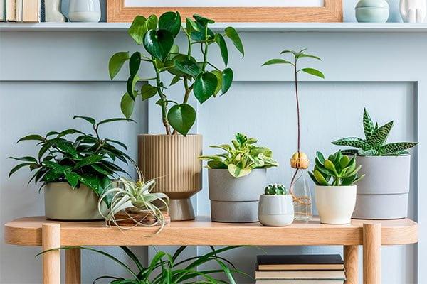 Decoración de interiores con plantas en conjunto