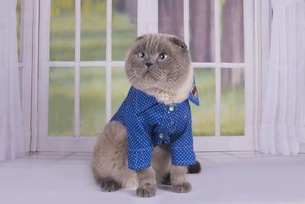 gato-frio