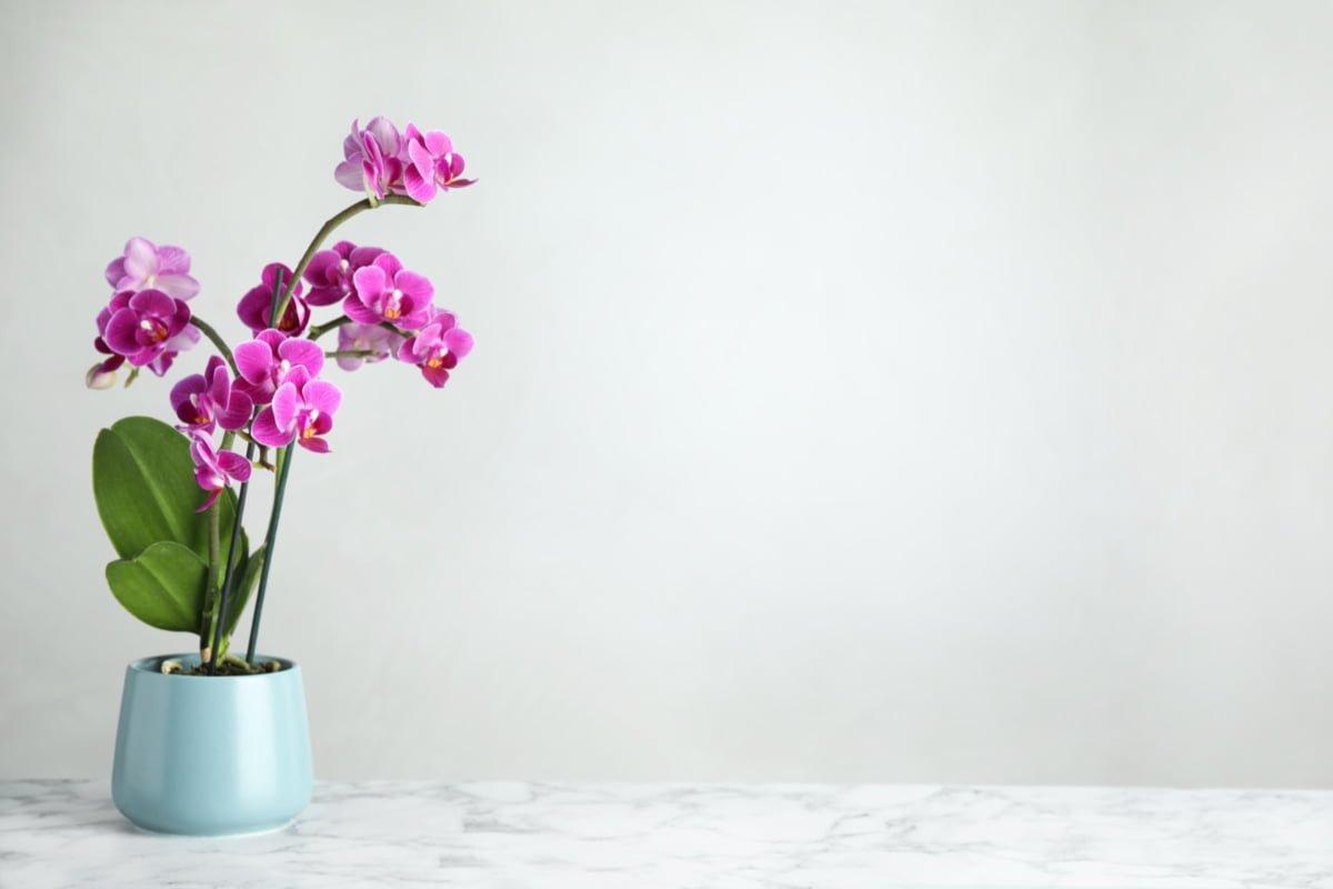 como-cuidar-orquideas