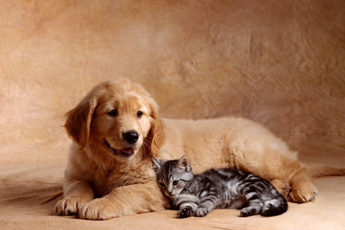 por que esterilizar a los perros y gatos