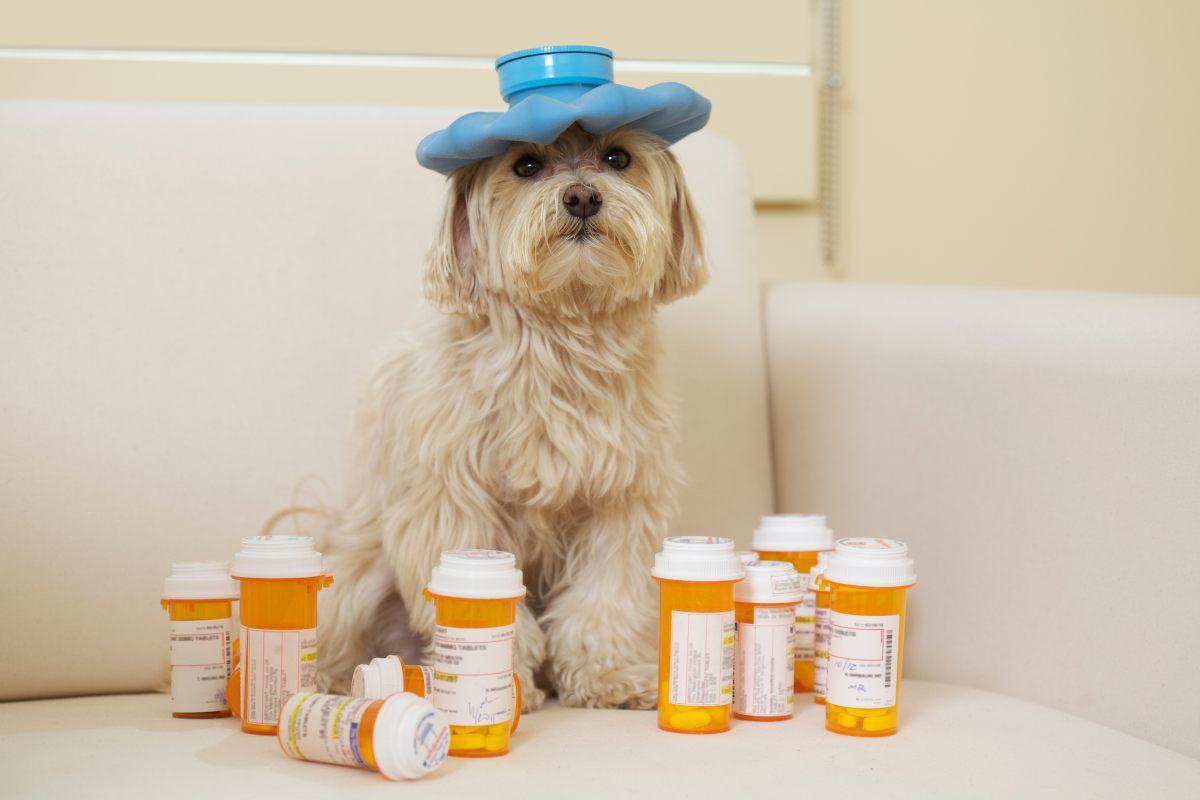Cuida-la-salud-de-tu-mascota