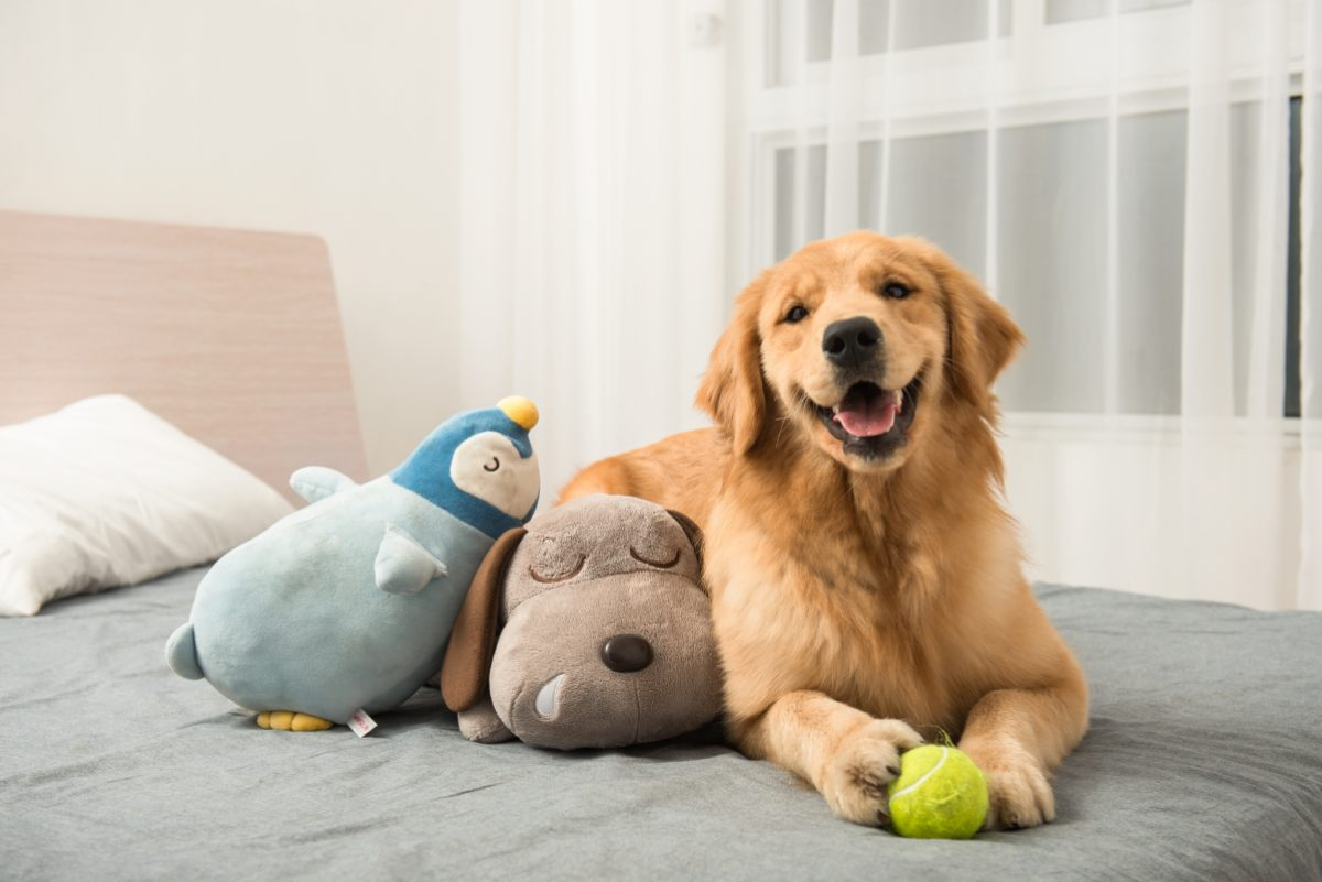 mascota-sola-en-casa