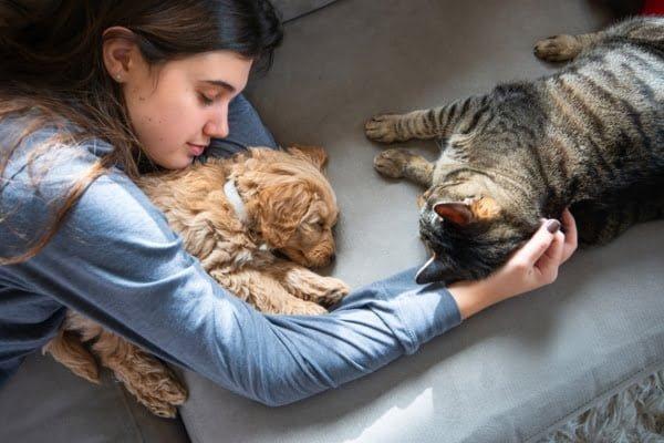 perros y gatos como llevarse bien