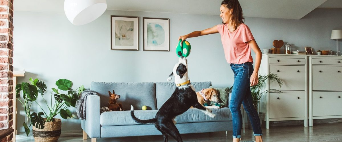 cómo-tener-un-perro-o-gato-en-casa