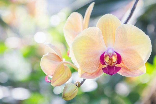 cuidar-orquideas-sol