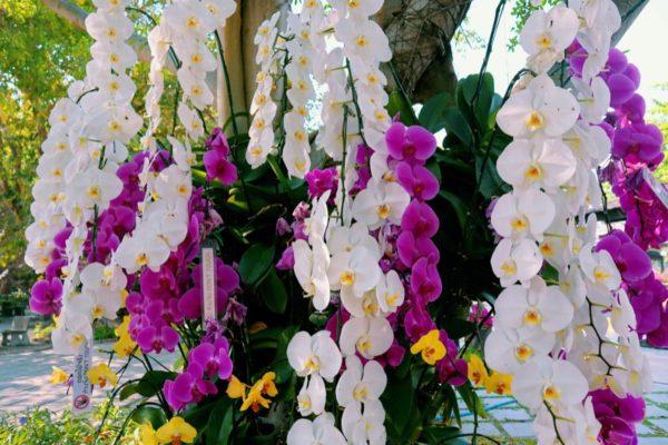 orquideas-habitat